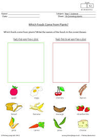 primaryleap co uk which foods come from plants worksheet