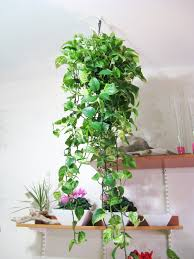 Home Decoration With Plants by Hanging Plants חיפוש ב Google Garden Pinterest Hanging