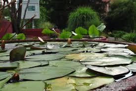 university of innsbruck botanical garden flowers u0026 things
