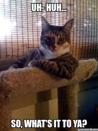 Sassy Cat Meme - cat