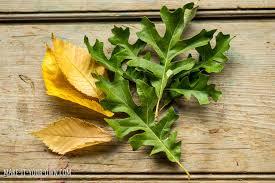Leaf Table Runner Hello Wonderful Kid Made Felt Leaf Table Runner