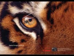 canon tiger eye