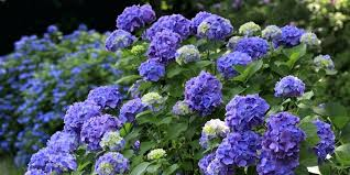 popular garden flower alexstand club