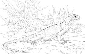 desert lizard coloring page leopard gecko coloring pages pertaining to lizard page ideas 15