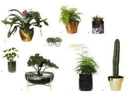 Fragrant Indoor House Plants Indoor Gardening Harness The Hidden Power Of House Plants U2013 The Line