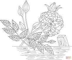 marechal neil or tea noisette roses coloring page free printable
