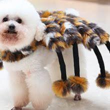 Spider Dog Halloween Costume Funny Guitar Player Dog Costume Halloween