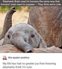 Elephant Meme - fact check do elephants think humans are cute