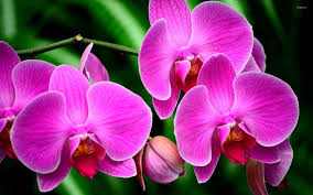 purple orchids purple orchids 3 wallpaper flower wallpapers 40250