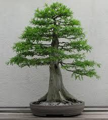 bonsai styles wikipedia