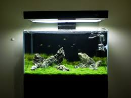 Diy Aquascape 2ft Diy Tank Aquatic Plant Central Aquascape Pinterest