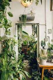 sensational sample of hanging indoor plants stylish artificial