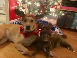78 best happy howlidays images on happy pet insurance