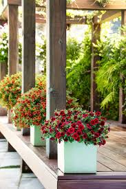 103 best container garden recipes images on pinterest flower