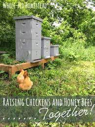 raising chickens u0026 honey bees together whole fed homestead