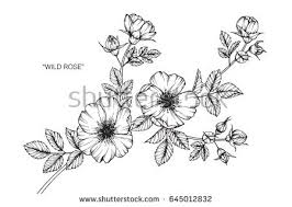 Flower Drawings Black And White - drawings stock images royalty free images u0026 vectors shutterstock