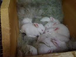 How Do I Get Rid Of Rabbits In My Backyard Breeding Az Rabbits