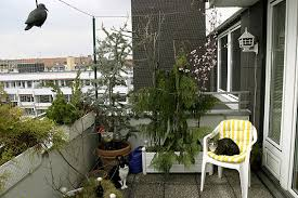 katzenschutz balkon balkonien für katzen geliebte katze magazin