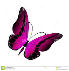 beautiful butterfly stock vector illustration of color 10297416