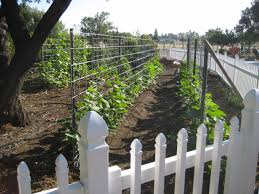best 25 cattle panel trellis ideas on pinterest garden beds
