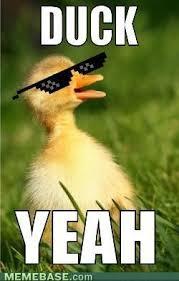 Funny Duck Meme - duck yeah funny meme image for whatsapp