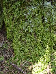 How To Make A Moss Wall by Live Moss Facts U0026 Questions