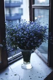 imagenes con flores azules dia de la maestra pin de julia grundling en colour blue pinterest azul flores y