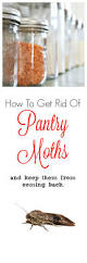 How To Get Rid Of Bugs In Kitchen Cabinets How To Get Rid Of Pantry Moths U0026 Keep Them From Returning