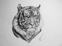 tiger daler rowney