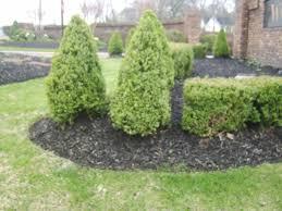 landscaping low maintenance backyard landscaping ideas