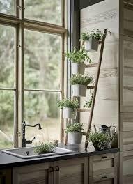 plante de cuisine quelles plantes dans ma cuisine idée déco plantes cuisine
