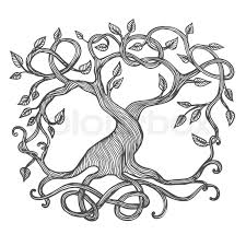 celtic tree of illustration of yggdrasil stock vector