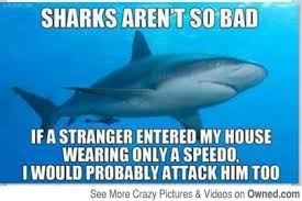 Shark Attack Meme - 20 funny shark pictures