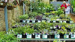 native plants nursery melbourne sydney u0027s best plant nurseries