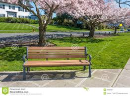 Benches In Park - park bench cherry trees residential street royalty free stock