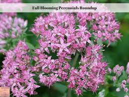Late Blooming Perennials Fall Blooming Perennials Roundup Exotic Gardening