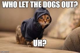 hoody cat meme imgflip