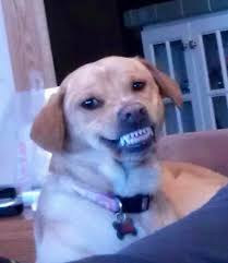 Dog Teeth Meme - my dog is a fuckin creep imgur