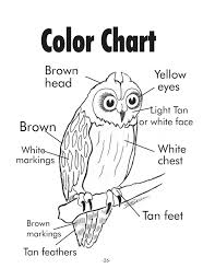 green coloring page short eared owl coloring sheet michigan green schools