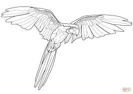 flying macaw coloring page free printable coloring pages