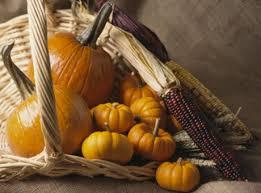 thanksgiving pumpkins nov25 jpg