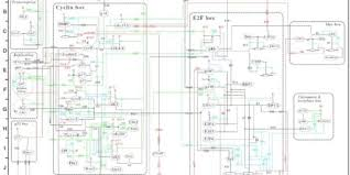 reversing single phase motor wiring diagram ac for with capacitor
