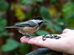 how to get birds to eat out of your hand mnn mother nature network