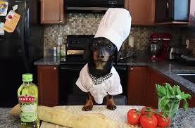 chien cuisiné un chien t apprend à cuisiner une bruschetta