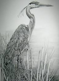great pencil artists 116 best herons paintings photos drawings images on