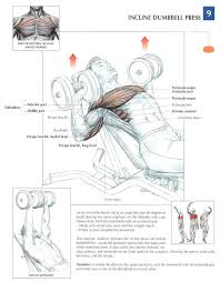 Flat Bench Dumbell Incline Dumbbell Press Is A Great Exercise For Working Your Chest