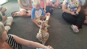 Indiana wild animals images The temptation of tiger baby playtime in southern indiana 89 3 jpg