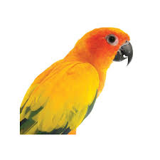 spirit halloween jonesboro ar birds for sale live pet birds for sale bird shop petco
