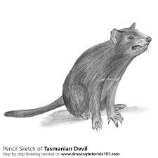 tasmanian devil pencil drawing how to sketch tasmanian devil