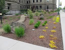 water efficient landscaping u2013 awkward botany